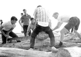 U Vic students cutting firewood at Clover Point