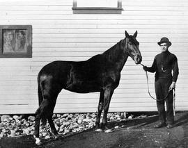 John Albany and his horse on the Songhees Reserve