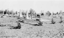 Ross Bay Cemetery, Japanese graves