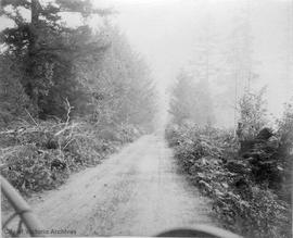Road near K's ranch, Saturna Island