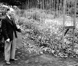 Herb Warren, Parks Administrator with sweet pea plants