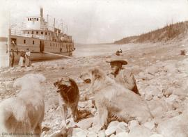 "Steamer ""Mackenzie River"" and husky dogs"