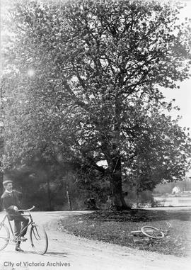 Cyclist at Maple Tree Bend on Gorge Road