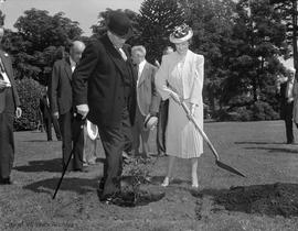 Mrs. E.W. Hamber planting a rose bush in Beacon Hill Park