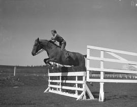 Chucky Carley, horse jumping at Willows Fairgrounds