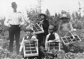Strawberry pickers, Vantreight's farm
