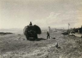 Hay Rake [haying on Dallas Road]