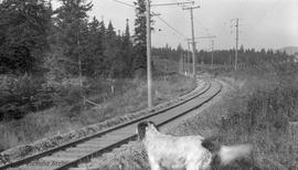 British Columbia Electric Company (BCER) train tracks near Garden City (Marigold)