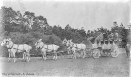 David Fair, driver for Tally-Ho, with a team of horses in Beacon Hill Park