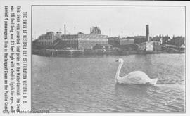 Swan at Victoria Day celebrations.  Laurel Point and BAPCO paint in background