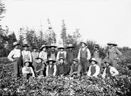 Berry pickers at Vantreight's farm